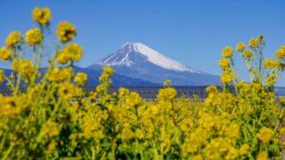 富士山が見えるインスタ映えポイント!いちご狩り農園から近くもあり